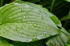 зеленый дождь листьев Стоковые Фотографии RF