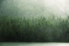 Зеленый дождь и зеленые кроны западное Sayan Стоковое Фото