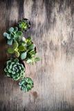 Зеленый дом засаживает в горшке, succulents в корзине Стоковое Изображение
