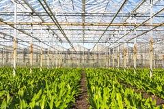 Зеленый дом для питомника цветков Стоковое Изображение