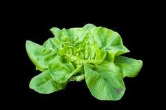 Зеленый органический завод салата Стоковые Фото