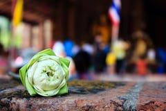 Красивейший зеленый лотос Стоковые Изображения RF
