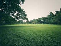 Зеленый парк внешний Стоковые Изображения