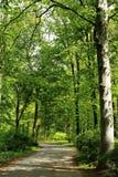 Зеленый парк в Берлине, Германии Стоковое Изображение RF