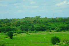 Зеленый парк в городе Таиланде Khon Kaen Стоковое Изображение RF