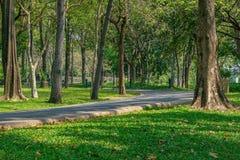 Зеленый парк с лужайкой и деревьями Стоковые Изображения RF