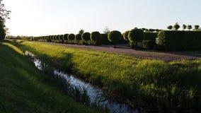 Зеленый парк Стоковые Изображения RF