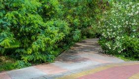 Зеленый парк c в солнечном летнем дне Стоковая Фотография