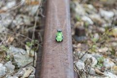 зеленый поезд игрушки Стоковое Изображение RF