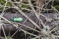 зеленый поезд игрушки Стоковая Фотография