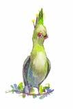 Зеленый попугай вектора в стиле акварели Попугай нарисованный рукой с Стоковое Фото