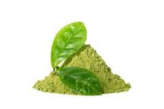 Зеленый порошок чая matcha при зеленые влажные листья изолированные на белизне Стоковое Изображение