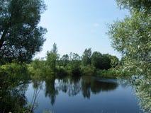 зеленый пруд Стоковые Фото