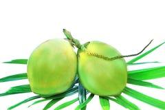Зеленый пук кокосов на листьях ладони изолирует белизну Стоковое Фото