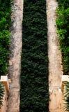 зеленый путь Стоковые Фото