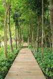 зеленый путь Стоковое Изображение RF
