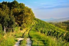 зеленый путь Стоковые Фотографии RF