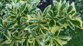 зеленый рай Стоковые Фотографии RF