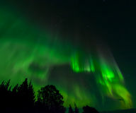 Зеленый рассвет вихря Стоковое Изображение