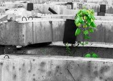 Зеленый расти дерева Стоковое Изображение RF