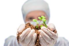 Зеленый росток в руках биолога исследователя Стоковое Изображение