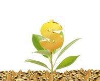 Зеленый росток растя от Стоковая Фотография