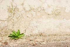 зеленый росток Стоковое фото RF