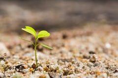 зеленый росток Стоковые Изображения RF