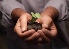 зеленый росток Стоковое Фото
