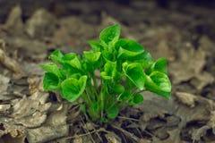 зеленый росток Стоковые Фотографии RF