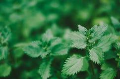 Зеленый рост Стоковые Фотографии RF