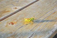 Зеленый саранчук Стоковое Фото