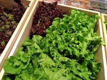 Зеленый салат в деревянной коробке Стоковые Фото