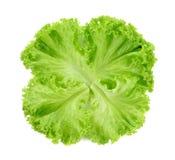 зеленый салат листьев Стоковое Фото