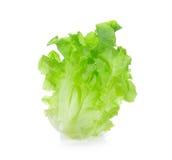 зеленый салат листьев Стоковые Изображения RF