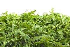 Зеленый салат лист Стоковое Изображение