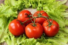 Зеленый салат и томаты на деревянной текстуре Стоковое Изображение