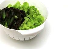 Зеленый салат красного дуба дуба в белой корзине на изолированной белой предпосылке Стоковая Фотография