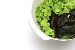 Зеленый салат красного дуба дуба в белой корзине на изолированной белой предпосылке Стоковая Фотография RF