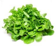 Зеленый салат на белой предпосылке Стоковые Изображения RF