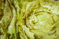Зеленый салат с фиолетовыми пятнами Стоковые Фото