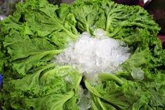 Зеленый салат с льдом на рынке Стоковое фото RF