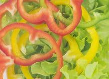 Зеленый салат дуба с multi болгарскими перцами цвета Стоковое Изображение RF