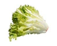 зеленый салат Стоковая Фотография RF