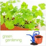 Зеленый садовничать Стоковая Фотография