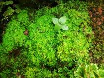 Зеленый сад папоротника Стоковые Фотографии RF