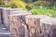 зеленый сад с деревянными штрафами Стоковая Фотография