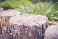 зеленый сад с деревянными штрафами Стоковые Изображения