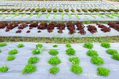 Зеленый свежий овощ Стоковые Фото