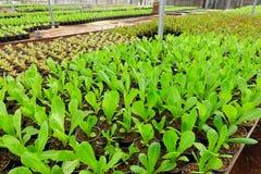 Зеленый свежий овощ Стоковое фото RF